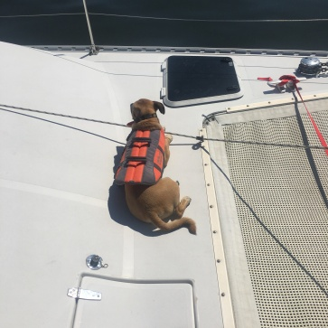 Lucky hanging out on deck