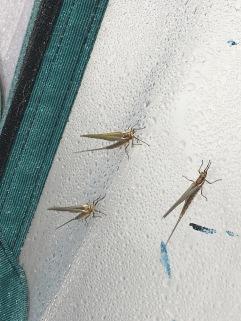 Moth? Scorpion?