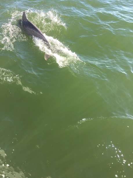 I am terrible at getting pictures of dolphins