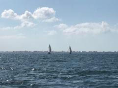 Boats under sail on Tampa Bay