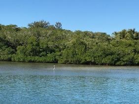 See the birdie standing in the water?? Not. Deep.