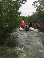 Following Mahi into the mangroves