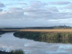 Morning over the marsh